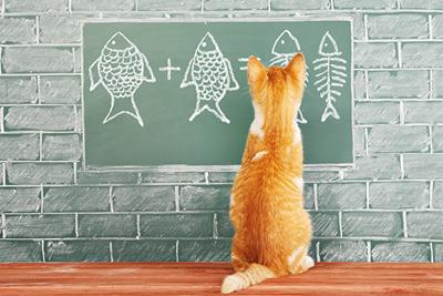 Bir gelişim planına asla eğitim programı ile başlamayın!